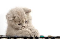"""Die Katze erscheint bei Skype mit der Tastenkombination """"cat""""."""