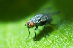 Harmlose Fliegen können nachts ganz schön nerven.