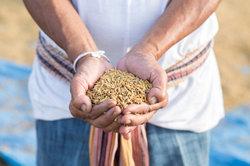Cash Crops sind Fluch und Segen gleichzeitig.