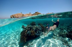 Schnorchler an einem Korallenblock
