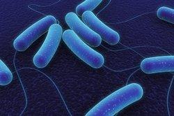 Bakterien haben nicht nur schlechte Eigenschaften für den Menschen.