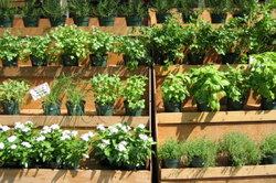 Aus kleinen Containerpflanzen werden schnell größere Exemplare.