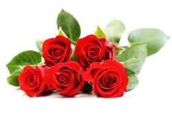 Rosenfarbe bedeutung