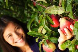 Äpfel schmecken gut.