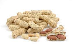 Gebrannte Erdnüsse gelingen mit frischen Nüssen.