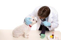 Die chemische Kastration ist eine Alternative zum chirurgischen Eingriff.