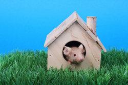 Mäuse lieben abwechslungsreiches Spielzeug.