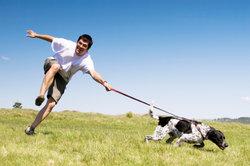So nicht? Tiertrainer können bei unterschiedlichen Problemen helfen.