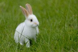 Hasen und Kaninchen sind beliebte Haustiere - bei ihrer Ernährung ist einiges zu beachten.