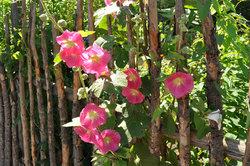 Ein Naturgarten gewinnt durch eine natürliche Einfriedung.