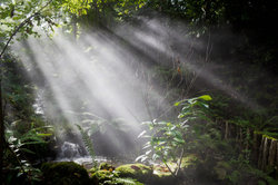 Licht ist ein fundamentales Bedürfnis der Pflanzen.
