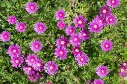 Eisblumen bieten einen farbigen Blickfang.