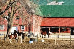 Die Pferde sind direkt beim Internat untergebracht.