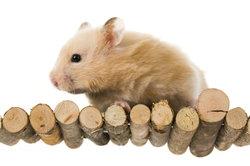 Das Hamster-Hotel ist eine tolle Behausung für das Tier.