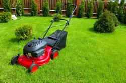 Auch ein Rasenmäher benötigt Wartung.