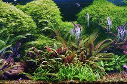 Ein Panorama-Aquarium vertieft den Blick auf die kleine Wasserwelt.