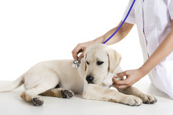 Studienplätze der Tiermedizin sind derzeit heiß umkämpft.