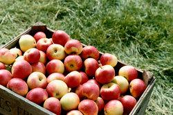 Äpfel sind sehr gesund.