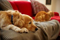 Zittern beim Hund kann verschiedene Ursachen haben.