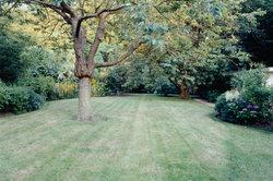 Viele Gärten weisen oft vertrocknete Stellen auf - dies kann viele Ursachen haben.