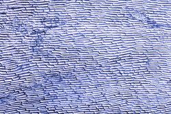 Zellwände dienen zur Festigkeit von Zellen.