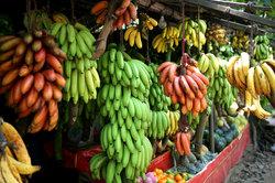Unreife und reife Bananen