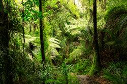 Der Regenwald ist die humideste Zone der Tropen.
