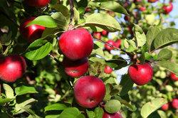 Gesund leben das ganze Jahr mit dem Apfel