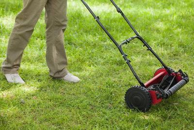 Die richtige Pflege sorgt für einen satten, grünen Rasen.