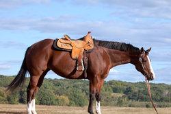 Ein guter Westernsattel verteilt das Reitergewicht auf der gesamten Auflagefläche.