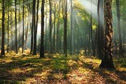 Im Wald finden Sie viele Naturmaterialien, die für Bastelarbeiten genutzt werden können.