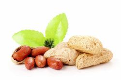 Die Nuss, die keine ist - die Erdnuss