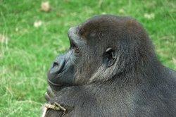Auch bei Tieren besteht eine Verbindung zwischen Ohr und Riechorgan.