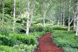 Birken sollten in optimaler Umgebung kultiviert werden.