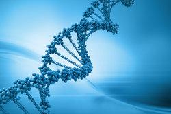 Die DNS erhält ihre Form durch Wasserstoffbrückenbindungen.