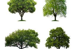 Die Entwicklung von Bäumen nachvollziehen