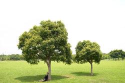 Bäume darf man noch lange nicht ohne Genehmigung fällen.