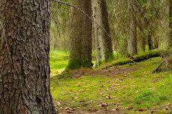 Mit Holz aus der Natur eigene Projekte verwirklichen