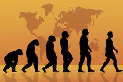 Diese Evolutionstheorie war ganz und gar nicht im Sinne Cuviers.