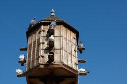 Der Eigenbau eines Taubenhauses
