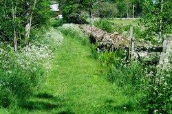Nicht alle Schwedenkräuter finden sich leicht in Wald und Wiese.