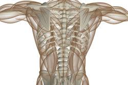 Muskeln erfüllen vielseitige Aufgaben im Alltag.