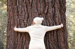 Jeder Baum unterliegt einem vorhersehbaren Lebenszyklus.