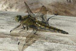 Insekten nach bestimmten Merkmalen genauer betrachten