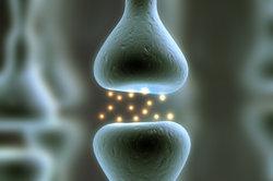 Die Synapse ist die Verbindungsstelle einer Nervenzelle mit einer aufnehmenden Zelle.