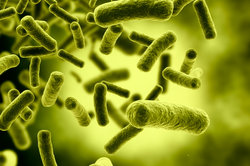 Bakterien haben wichtige Aufgaben in der Natur.