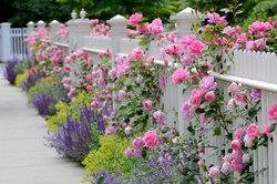 Unterschiedliche Blühpflanzen in Kombination können zauberhaft aussehen.