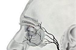 Der Trigeminusnerv verläuft auch im Wangenbereich.