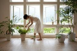 Pflanzen bilden bei ihrem Stoffwechsel sogenannte Assimilate.