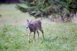 Bambi findet in Klopfer einen treuen Freund.